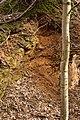Kamieniołom na Wzgórzu Rokitki - wyrobisko.jpg