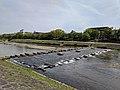 Kamo River near Kojin Bridge.jpg