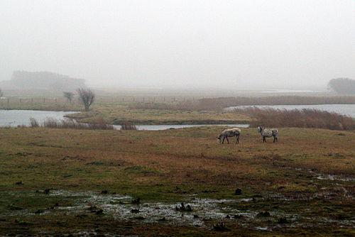 Katinger watt zwei pferde 10.02.2011 16-50-56