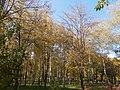 Khimselyshche, Cherkasy, Cherkas'ka oblast, Ukraine - panoramio (121).jpg
