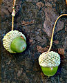 Kindred Spirit hybrid oak unmature acorns.jpg