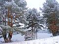 Koronowo - Lipkusz , widok nad brzegiem jeziora - panoramio.jpg