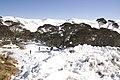 Kosciuszko National Park NSW 2627, Australia - panoramio (229).jpg