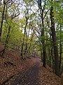 Kunratický les, cesta.jpg