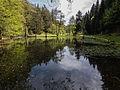 LSG Thüringer Wald Teiche an der Talmühle Wickersdorf 3 DE-TH.jpg