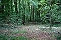 Langunnett Wood - geograph.org.uk - 217967.jpg