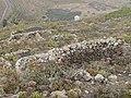 Lanzarote vegetation on a hill.jpg