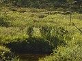 Lapland - Urho Kekkonen National Park - 20180728172325.jpg