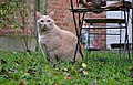 Larry the cat sitting besides a wooden lawn chair in Auderghem, Belgium (DSCF2368).jpg