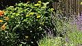Lavendelbeet im Innenhof 02.jpg