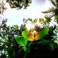 Leaf and sun.jpg