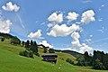 Lesachtal Tscheltsch 4 Joehrerhof weidende Schafe 16072014 638.jpg