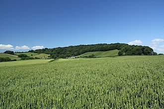 Lewesdon Hill - Image: Lewesdon Hill from the south