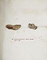 Lichenes Helvetici IX X 1833 032.jpg