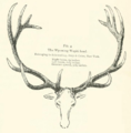 Life Histories of Northern Mammals (1909) Wyoming Cervus canadensis.png