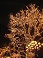 Liseberg christmas trees.jpg