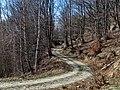Lisina, Serbia - panoramio (6).jpg