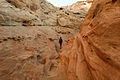 Little Wild Horse Canyon (4052916685).jpg