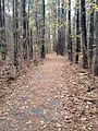 Loblolly Trail, Raccoon Pond, Laurel Delaware.JPG