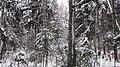 Lobnya, Moscow Oblast, Russia - panoramio (504).jpg