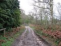 Looking SW along start of bridleway from Lord's Piece - geograph.org.uk - 1246082.jpg
