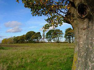 Lullingston Park.jpg