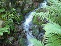 Mühlgrabenweg - Naturpark Bayerischer Wald.JPG