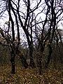 M3, Moldova - panoramio (2).jpg