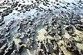 MK-08231 Hamelin Pool Stromatolites.jpg