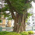Macau - panoramio (60).jpg