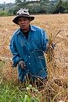 MaeChan Thailand Rice-Farmer-01.jpg