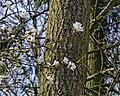 Magnolia b.jpg
