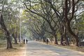 Main Road - Indian Institute of Technology Campus - Kharagpur - West Midnapore 2015-01-24 4846.JPG