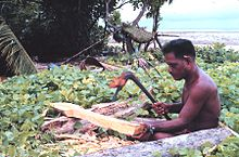 adze. micronesian of tobi, palau, making a paddle for his wa with an adze o
