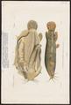 Malapterurus electricus - 1700-1880 - Print - Iconographia Zoologica - Special Collections University of Amsterdam - UBA01 IZ14600151.tif