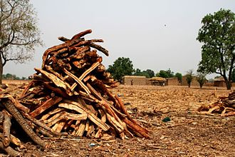 Environmental issues in Mali - A stack of fuel wood in Mali. Consumption of wood for timber is contributing to Mali's continuing deforestation.