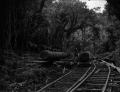 Man transporting logs with horses and railway in the Akatarawa Bush, Hutt Valley ATLIB 241830.png