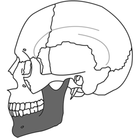 Mandible Simple.png