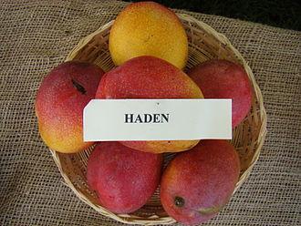 Haden (mango) - A display of mature 'Haden' fruit
