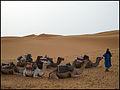 Marruecos - Morocco 2008 (2864133311).jpg