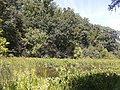 Marsh and trees, Theodore Roosevelt Island.jpg