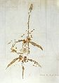 Mary Anning (1799-1847); letter with dinosau Wellcome L0031727.jpg