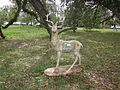 Mary Plantation Deer.JPG