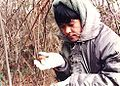 Matsutakeredpinemushroomhunting.jpg
