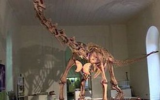 Minas Gerais - Maxakalisaurus.