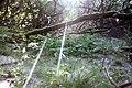 Maya Wendler - GPS 51.201643, 6.883316 - Naturschutzgebiet Unterbacher See (Eller Forst) 40627 Duesseldorf (6).jpg