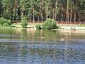 Mežciems, Vidzemes priekšpilsēta, Rīga, Latvia - panoramio - Dmitrij M (1).jpg
