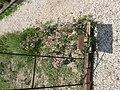 Medieval garden (Perugia) 14.jpg