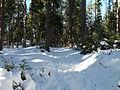 Medvědí stezka, cesta lesem 01.jpg