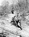 Men of an Indian forestry company use elephants to transport logs to be used to build boats for crossing the Chindwin River, Burma, 23 February 1945. SE3198.jpg